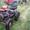 самодельный малогабаритный трактор #298646