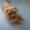 Щенок чау-чау цимтового окраса #1270861