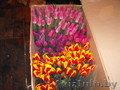 Продажа тюльпанов